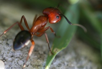 ant control ant removal athens ga