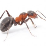 ant control ant removal