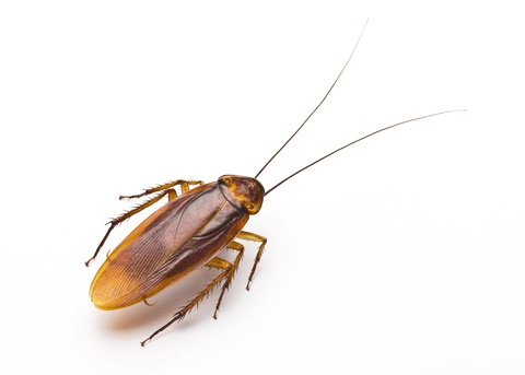 roach control roach removal