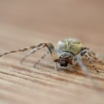 house spider removal