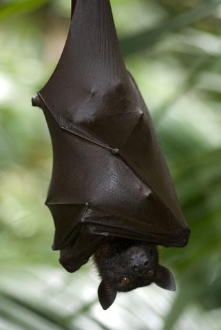 bat control bat removal